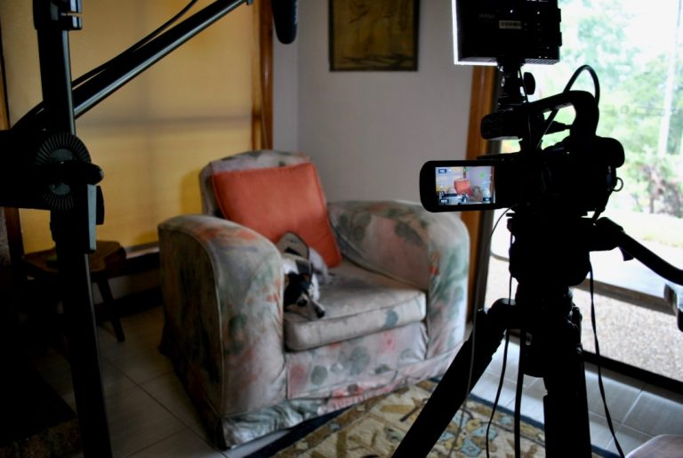 Dog sitting on chair with camera filming